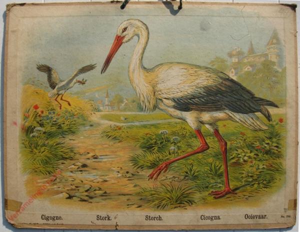 738 - Cogogne, Stork, Storch, Cicogna, Ooievaar